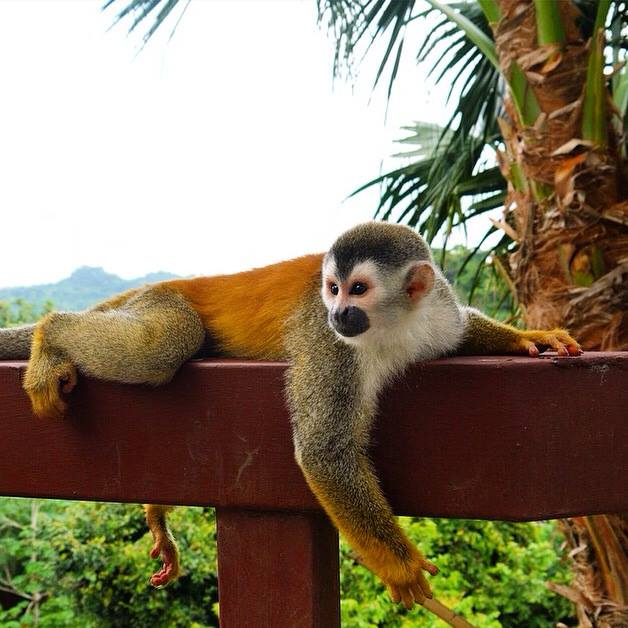 Wildlife monkey
